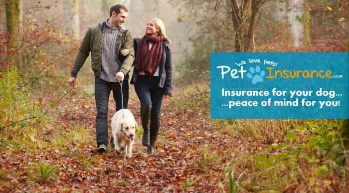 dog-insurance-1