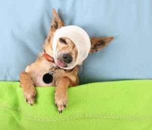 dog-insurance