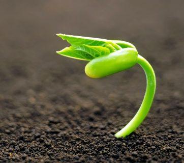 Planting Insurance